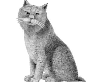 Bobcat - 4x6 print