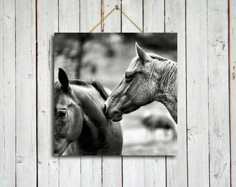Comfortably familiar - 10x10 Canvas - Black and white horse art - Black and white decor - Horse wall art.