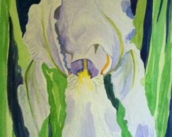 SALE, Beaded Iris, original watercolor painting, Louisiana southern flower