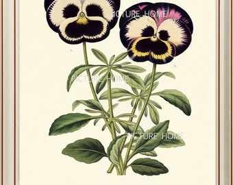 Botanical Print PANSIES H17 Beautiful 8X10 Antique Pansy Spring Garden Flower Art Room Decoration Wall Art to Frame