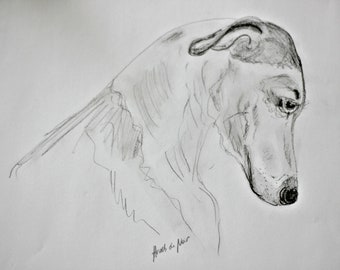 Borzoi Sketch Art