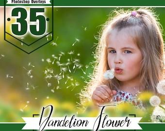 35 dandelion flower photo overlays, photoshop overlay, photo overlays, summer wedding baby photo, photoshop templates,PNG files