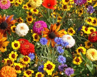 1 TSP BULK Seeds Children's Garden Mix, Easy to Care For, Blooms in 6 Weeks, 11 Different Types of Annual Flowers
