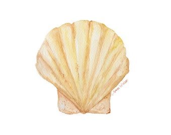Clam Watercolor Painting - 11 x 14 - Seashell Art Summer Beach Print - Giclee