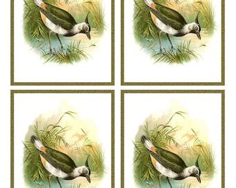 Vintage PEEWIT BIRD Framed Image Sheet - Digital INSTANT Download - nature avian songbird ephemera print collage supply