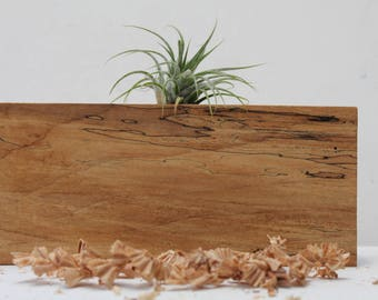 Reclaimed Spalted Maple Air Plant Holder  Mo15