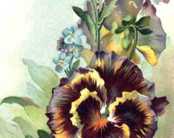 """Vintage Fusible image pansy bouquet 2 1/4""""x3 1/4"""""""