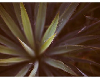 Art Photograph - Floral Photography - Nature Photograph - Fine Art Photograph - Yucca 1 - Green - Art - Still Life - Alicia - Garden Art