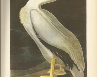 Original Vintage 1941 JohnJames Audubon Birds of America Bookplate Print Bird Print 311 White Pelican 312 Old Squaw