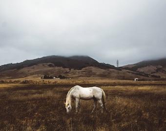 Horse on a Foggy Day
