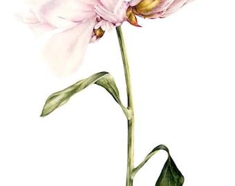 Peony Print, Art Print, Flower Painting, Wall Art, Botanical Peony Painting, Botanical Watercolor, Botanical Illustration, Gift for Her, Art