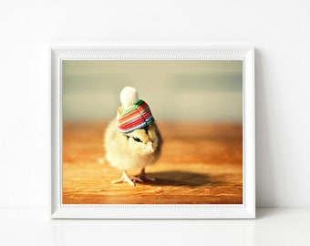 Chicken Photograph Baby Chick In A Rainbow Pom Pom Hat Photograph Nursery Decor Funny Gift