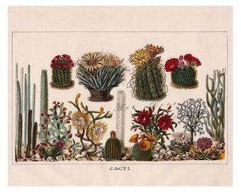 vintage cactus print, colorful cacti, a printable digital download no. 624.
