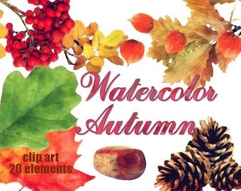 Digital 20 Autumn Watercolor clip art, maple leaves clip art, autumn nuts Digital Collage, Instant Download