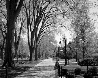 Penn State Photography, Black and White Picture, Graduation, Landscape, Campus, Elm Trees, State College, Nature -8x10 inch Print - Timeless