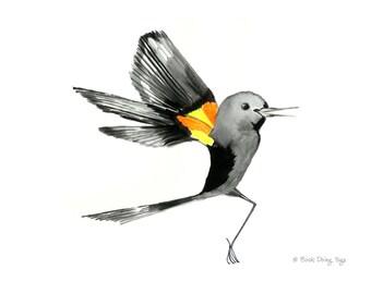Red Winged Blackbird Drinking