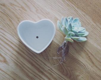 Rare Succulent-Medium Heart Shape Planter with Drainage Hole