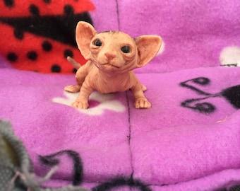 kittenMicro Sphynx