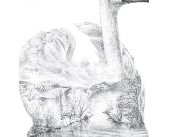 Swan Pencil Drawing - Faunascapes by WhatWeDo