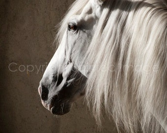HERO, Andalusian Stallion, Edition Print, Wall Decor, HORSE PHOTOGRAPHY, Equine Art