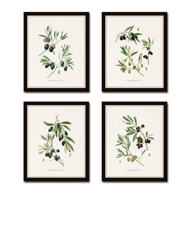 Olive Kitchen Accessories Price List: Antique Olive Prints Botanical Print SetsBotanical Prints