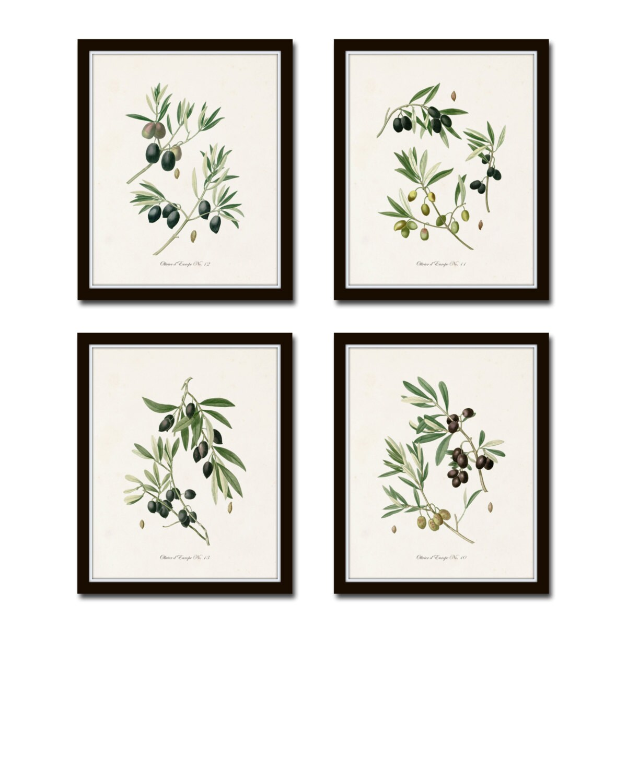 Antique Olive Prints Botanical Print SetsBotanical Prints