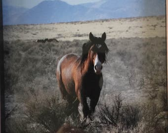 Mustang Wild Horse in Nevada Virginia Range Historical Herds Photograph by Cat Kindsfather of Bandit the Stallion in Wood Frame
