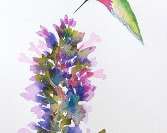Anna's hummingbird with agastache flowers, original watercolor