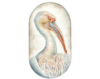 Original 8x10 Watercolour Pelican.. NOT A PRINT ..Original Painting