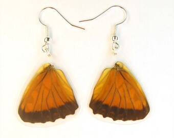 Pair of earrings from real butterfly wings of Dione juno
