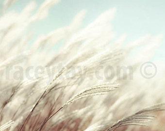 Nature Photography, Pastel Beach Decor, White, Blue, Beach Grass, Large Wall Art