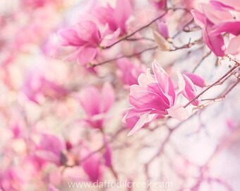 Pink Wall Art, Shabby Chic Wall Art, Flower Wall Art, Pink Wall Decor, Pink Bedroom Art, Shabby Chic Decor, Magnolia Photo, Flower Print