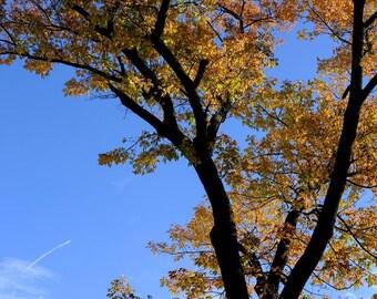 5 x 7, 8 x 10, 8 x 8, 8 x 10, 10 x10, 11 x 14, 16 x 20 Autumn Sunlight Digital Photo Print