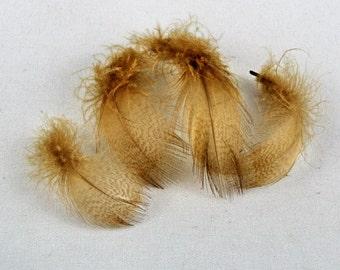 wood duck feathers  Mallard Flank dyed scrap booking craft supplies embellishments