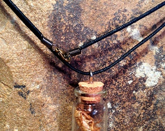 Cicada shell bottle necklace