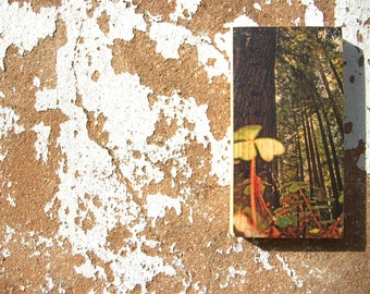 Wooden Print - California Woods | Wood | Print | Wall Art | Decor | Natural Prints | Surf Art