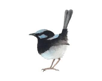 Blue and Black Bird - Fine Art Print