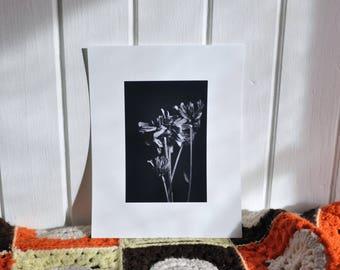 Dried Flowers Print