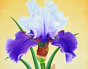 Iris Purple Majesty