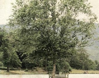 "Tree Photo, Tree Art, Green Nature Landscape Print, North Carolina Nature, Cottage Farmhouse Decor, Rural Countryside Print- ""Solitude"""