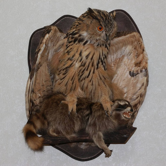 taxidermie aigle
