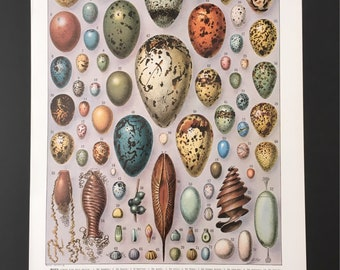 Board naturalist, history & natural sciences - eggs - Larousse