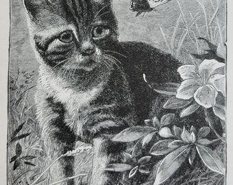 c1889 Kitten Butterfly Print Engraving Antique Victorian Cat Vintage E141