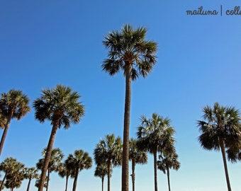 Sun & Palm Trees | Photography Print | Wall Art | Home Decor | Nature | Southern Photography Print