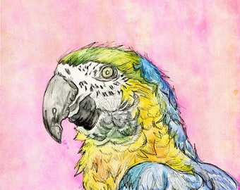 Parrot (original watercolor and ink painting)