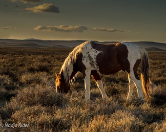 Tango in the Sunset - Wild Mustang of Sand Wash Basin - 20x30 Gallery Wrapped Canvas Print