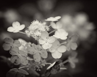 Black and white Photography nature dark art flowers soft romantic home decor for her decor wall art summer spring drama dramatic photo art