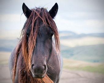 Rustic decor, horse photo, black and white, brown, fine art photo, animal photograph,20x16, 24x16, 30x20, 36x24 or 45x30 large print