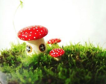 The Toadstool's Secret Home For Your Terrarium