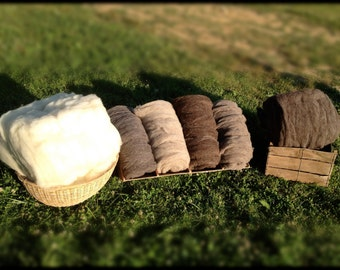 Organic Jacob Sheep Wool Roving -Grey